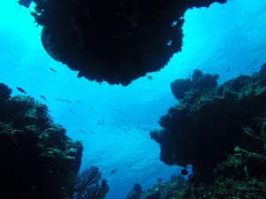 coral cozumel diving